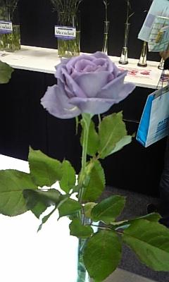 blue_rose.jpg