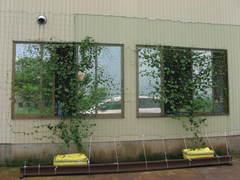 green_curtain02.jpg
